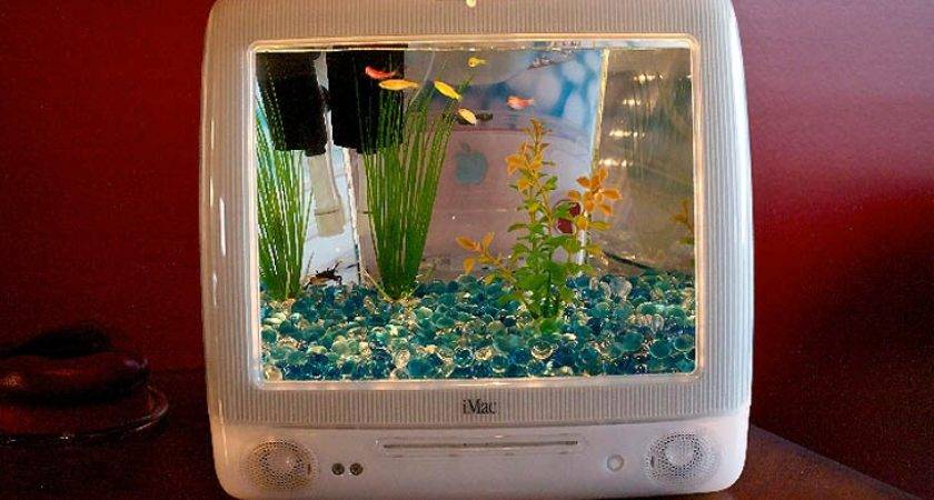 Betta Fish Tanks Unique Diy Tank Ideas