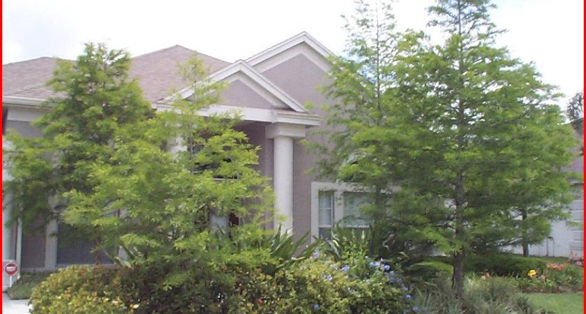 Can Plant Small Forest Cypress Trees Front Your House