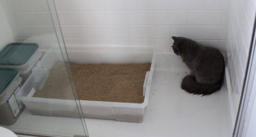 Different Kitty Litter Mix Here Pretty Good Summary
