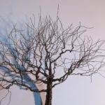 Inspirations Metal Wall Art Trees Branches